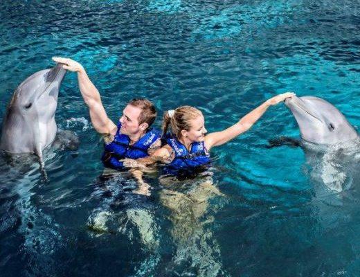 inot-cu-delfinii